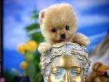 Teddyface Gülen tip boo