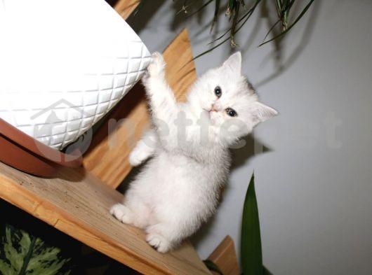 tatlı bebişlerimiz yeni yuvalarını BEKLİYOOR :)