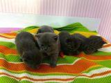 Ankara'nın en orjinal kedileri
