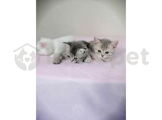 2 aylık yavrular