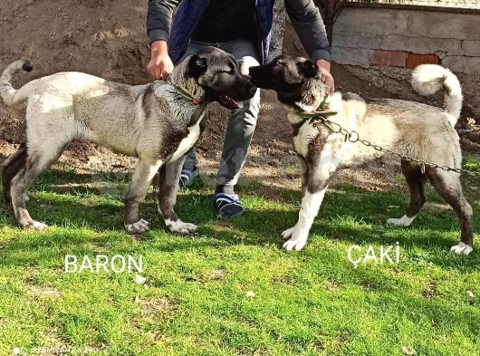 Baron&Çaki