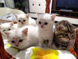 Sevimli bebekler