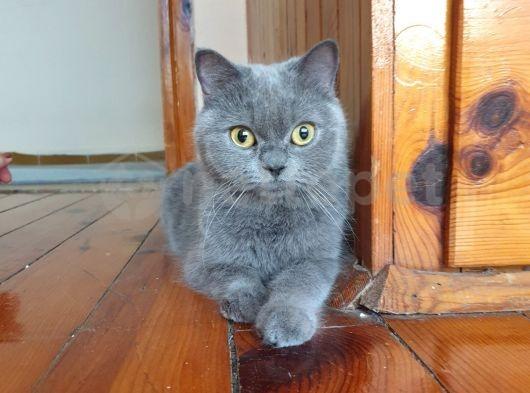 1 buçuk yaşında kızanda kedimiz