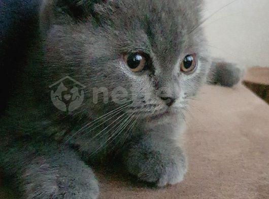 Göreceğiniz en sakin, en uyumlu, en sevgi dolu kedi