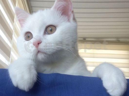 Yakisiklı beyaz prens