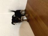 Minik dostumuz yeni yuvasını arıyor..