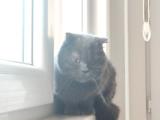 Irk Garantili Yetişkin Dişi Kedim Kısırlaştırılmamış