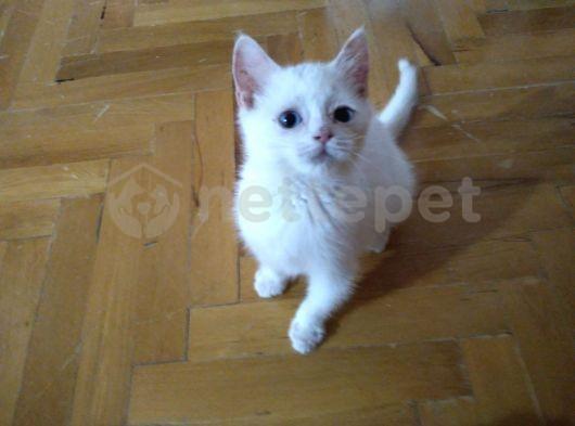 Kimse kedisiz kalmasın Beyaz ve tricolor yavrular