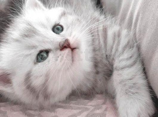 Aşırı tatlı oyuncu kediler (Baba SCRli)
