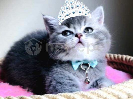 Minik prenses yeni yuvasını arıyor