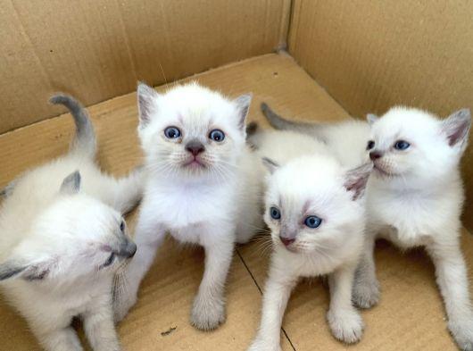 Veteriner hekimden sağlıklı kediler