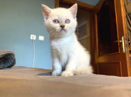 Maviş gözlü oğlum yeni yuvaya gitmeye hazır