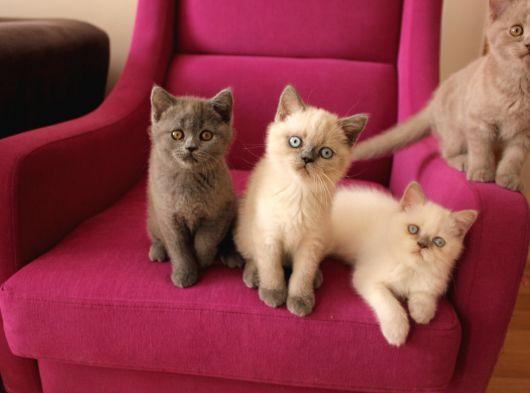 Birbirinden güzel yavru kedilerimiz yeni ailelerini arıyor