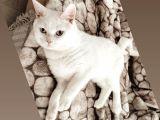Cokk sakin bir kedi