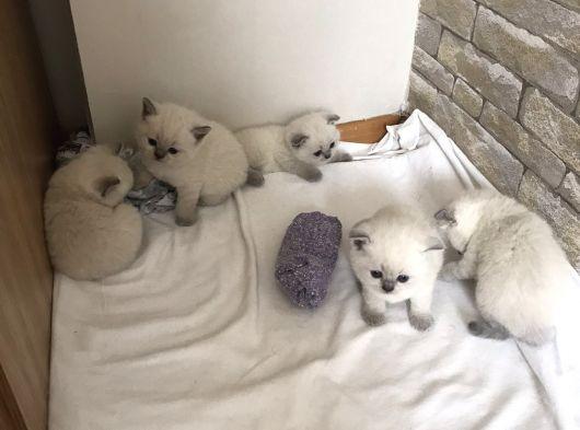 Safkan yavrular sahibini bekliyor