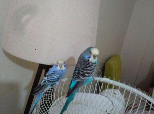 Kuşlar ve kafes