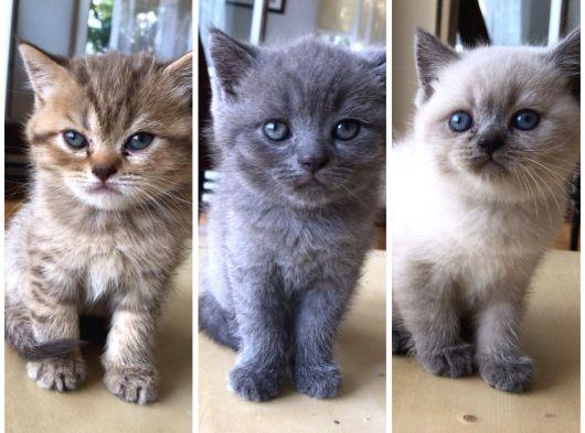 Sahiplendirilmeye hazır 3 yavru