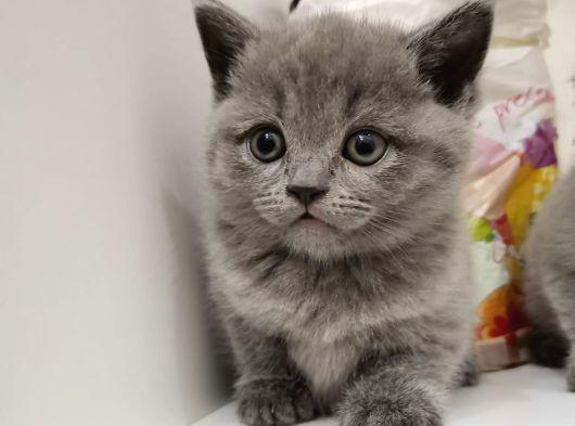 Yavru kedimize yeni aile arıyoruz