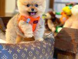 """Mini boy teddy""""ayıcık"""""""