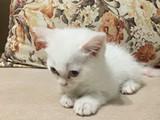 Evde kendi kedimizin yavrusu