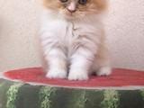 Ev kedimin yavrusu