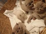 Minik kedilerimiz