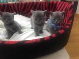 Kendi kedilerimin yavruları