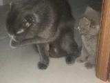 Dişi Kedimize Yuva Arıyoruz