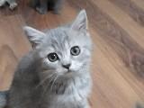 Guzel cins yavru kedilerim