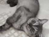 son kedime mutlu bir yuva