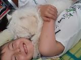 Safkan Maltese terrier 5 ayliga kadar asilari yapilmis