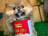 En İyi Irk ve Fiyat Garantili PomeranianBoo Yavrularımızdan