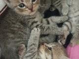 Yavru kedi ömür boyu yuva arıyoruz