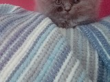 Yavru kedimi bakamadığım için satıyorum