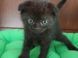 sevimli kedi yavruları
