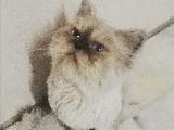 İran kedisi 2 yaşında erkek kedimi bakabilecek hayvan sevgisi olan birine emanet etmek istiyorum.