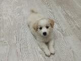 3aylık terrier
