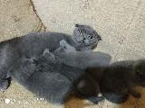 Kedimin yavrularını ücretli sahiplendiriyorm