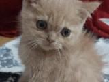 Sevimli yavrumuza yeni yuva arıyoruz :)