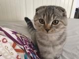 yakışıklı oğlan kedimiz