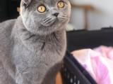 6 aylık kedimizi ücretli sahiplendiriyoruz