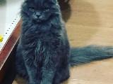 Merhaba kedim 8 aylik saglikli  ası karti vardir 700 tl erkekdir