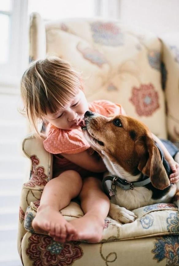 Beagle Köpeğinin Karakter Özellikleri