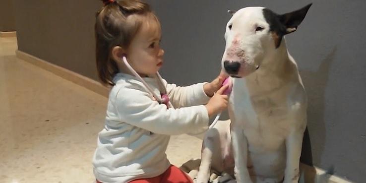 Bull Terrier Köpeğinin Karakteri ve Çocuklarla ilişkisi