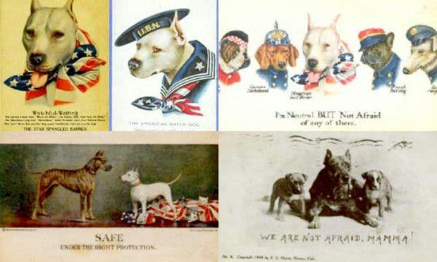 Pitbull Köpeğinin Tarihçesi